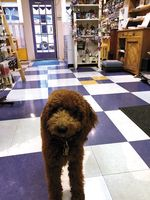 IMG_0820 Amos the shop dog